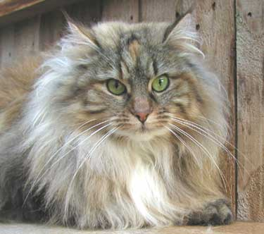 Cat Adoption Santa Cruz Ca